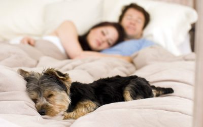 Sleeping with Pets in Bed – Pros and Cons